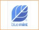 blue-mint-04