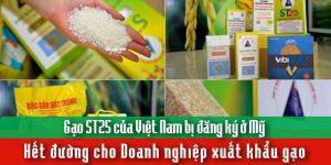 Gạo ST25 của Việt Nam bị đăng ký ở Mỹ – Hết đường cho doanh nghiệp xuất khẩu gạo?